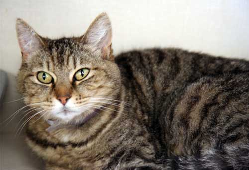 http://www.animalfriendsrescue.org/available/cat_punkin.jpg
